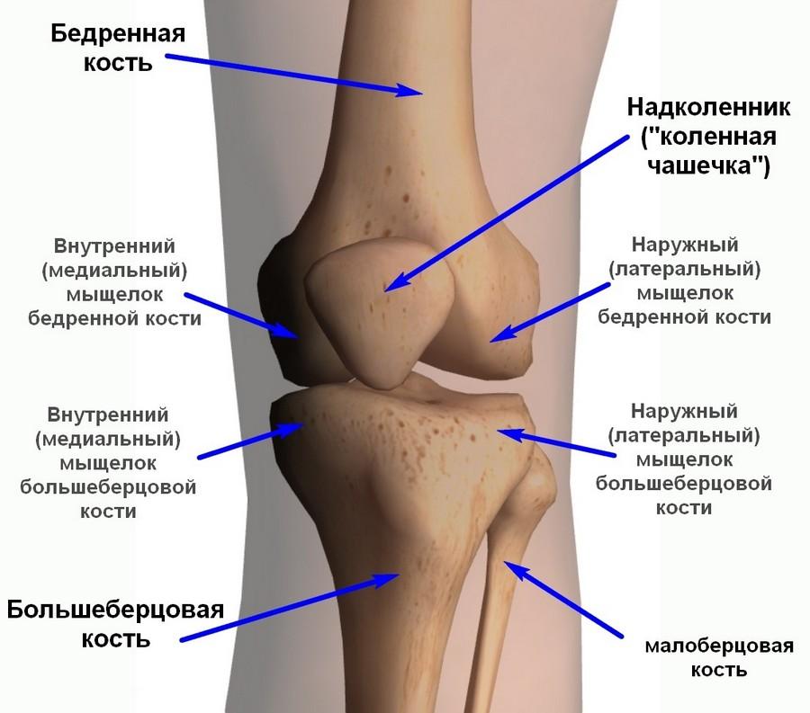 Строение костей голени