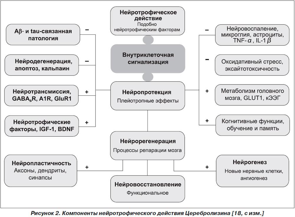 Нейротрофическое действие