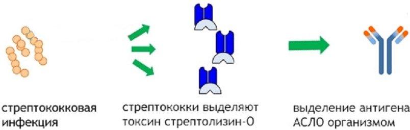 Антитела к стрептококку