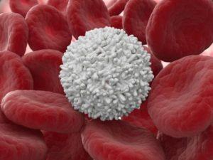 Антитела активно передвигаются по системе кровообращения