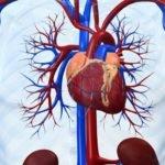 Патологии сердечно-сосудистого отдела