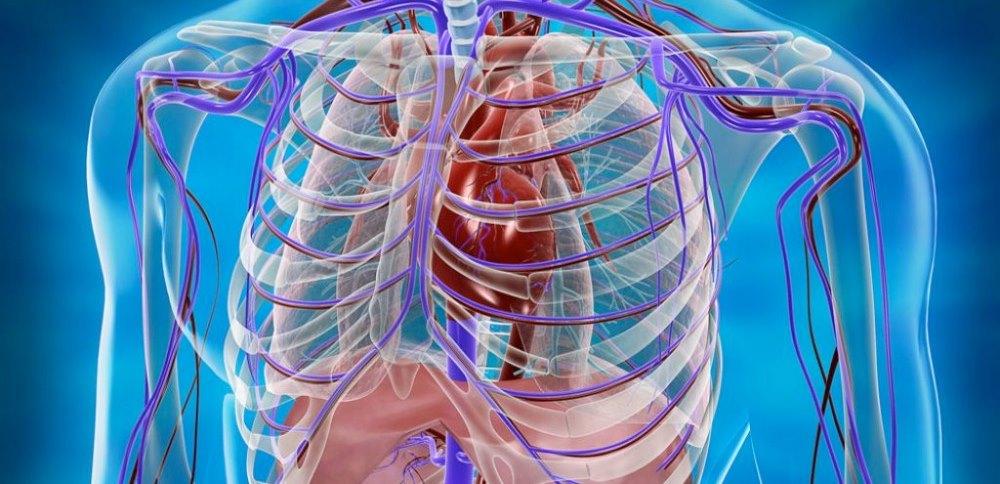 Патологии внутренних органов
