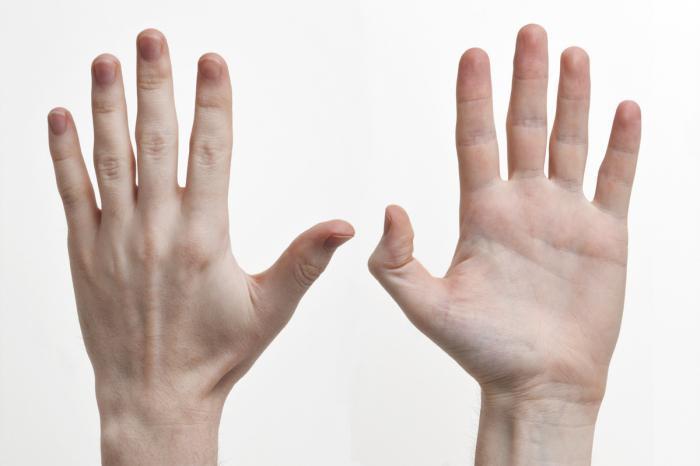 Длина поврежденного пальца может стать меньше длины здорового пальца на другой руке
