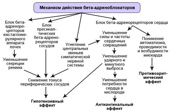 Механизм действия бета-блокаторов