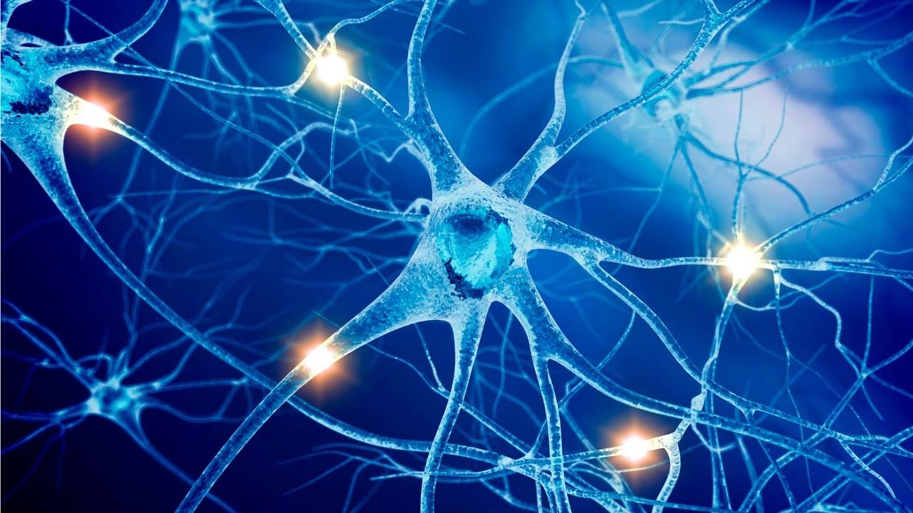 Нервное волокно
